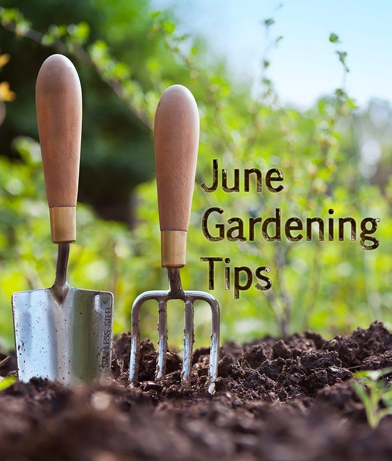 30 Amazing Ideas For Growing A Vegetable Garden In Your: June Gardening Tips. June Is A Great Month For Outdoor
