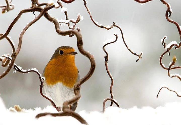 wasbella102  natur tiere vögel als haustiere vögel fotos