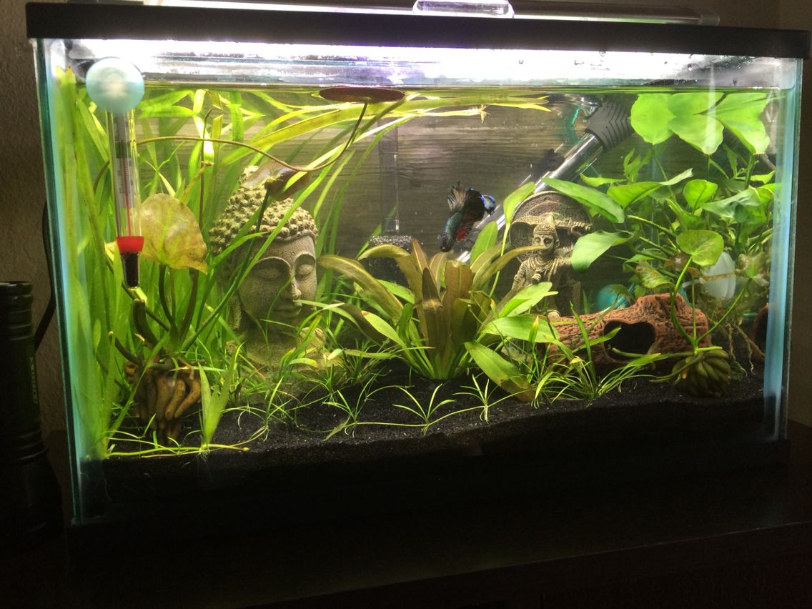 My 5 gallon betta tank heavily planted my aquariums for Betta fish tank ideas