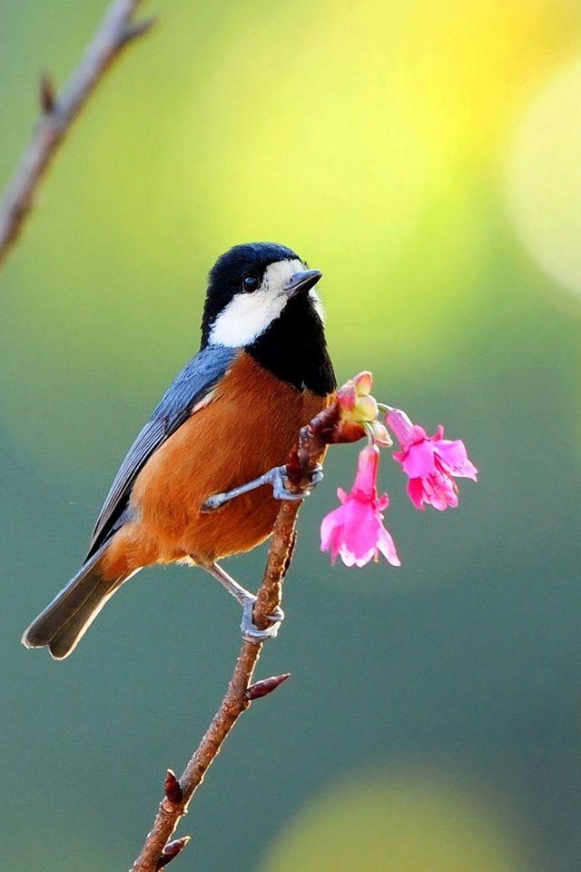 Image Detail for Beautiful Bird Simply beautiful