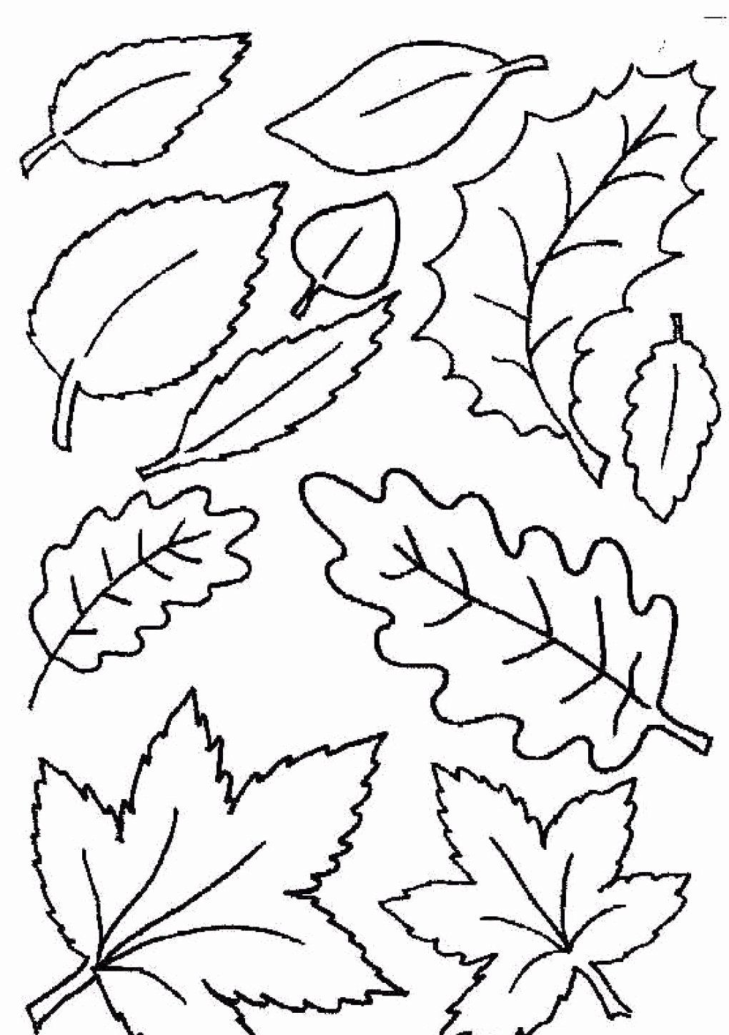 Coloring Book Tree With Leaves New Coloring Books Fall Leavesoring