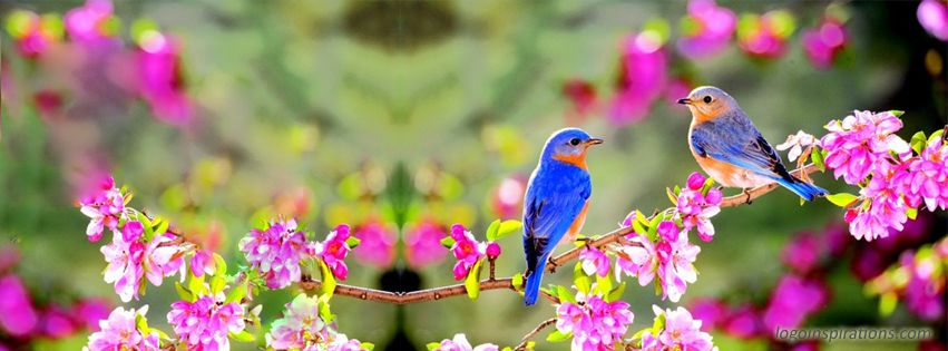 Beautiful birds nature facebook cover a little of this - Nature cover pages for facebook ...