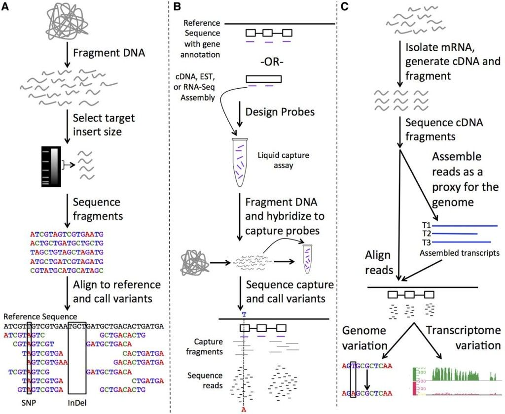 Technology And Software Improvements In The Last Decade Now Provide Methodologies To Access The Genome Sequence Of Not Only A Single Genome Sequencing Approach Aligning rna seq reads to reference
