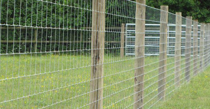 LLAMAS   ALPACAS - Essex Field Fencing - field and paddock fencing