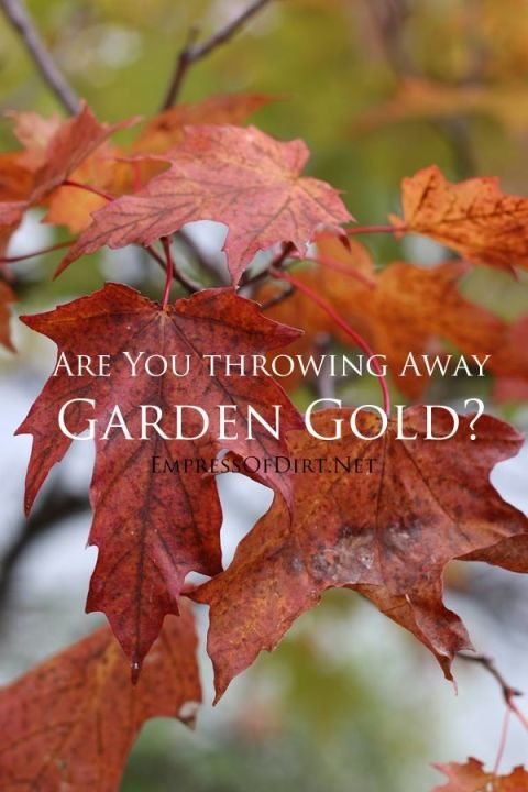 Wait! Before you rake those leaves and bag them up, consider how valuable they can be for the garden. They not only serve as top quality garden mulch but also to enrich the soil as they decompose. And best of all, they're free! Save your leaves and improve your garden naturally.