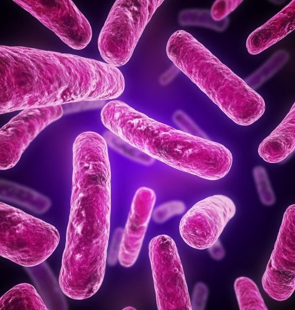 revolución matar parásitos estomacales