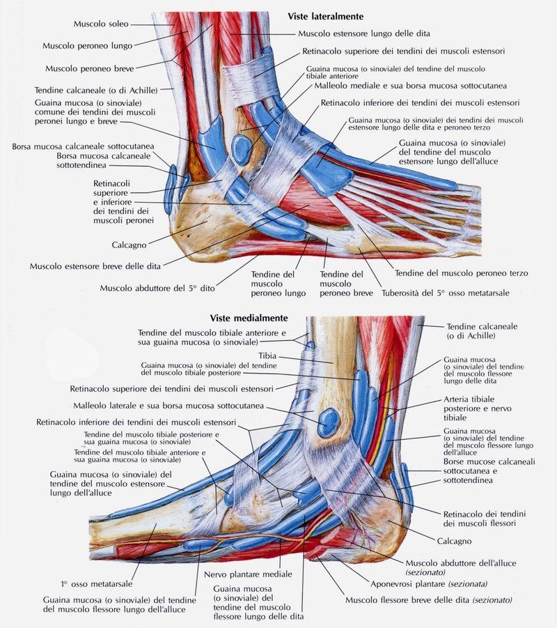 taping flessore lungo delle dita del piede - Cerca con Google | Feet ...
