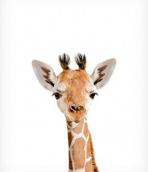 Giraffe drucken, Safari Tierdrucke, The Crown Prints, Baby