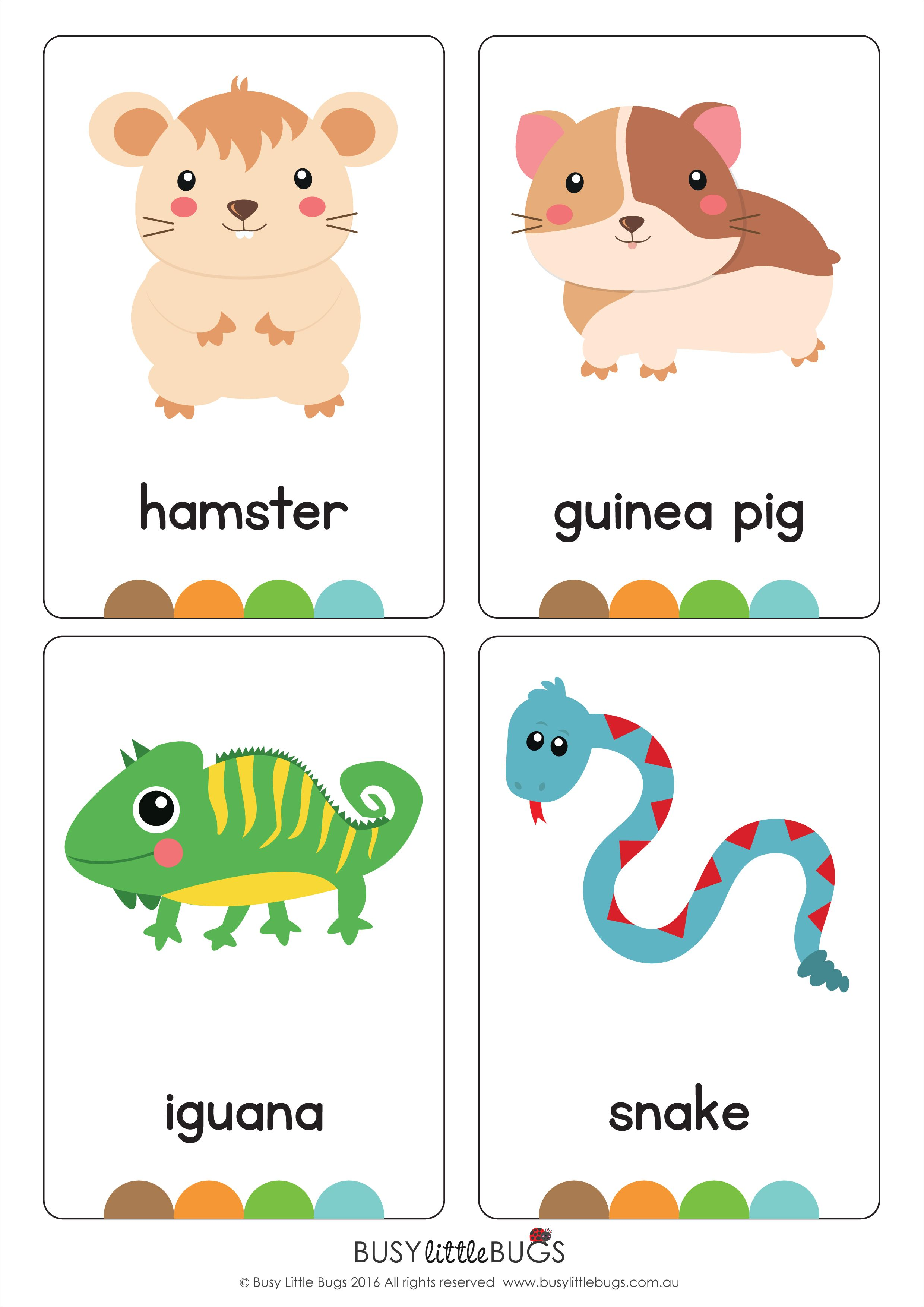 My Pets Flash Cards Pet Animals Cute Pets Flash Cards