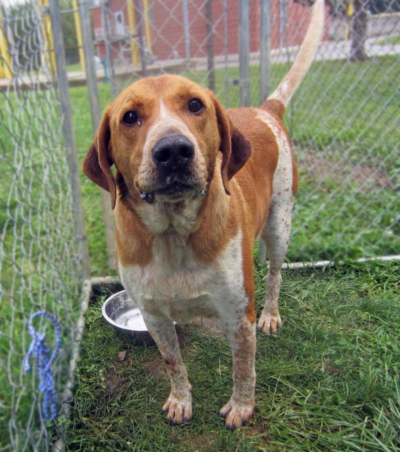 Adopt Todd Yrly 379 On Petfinder Animal Shelter Redbone Coonhound Animals