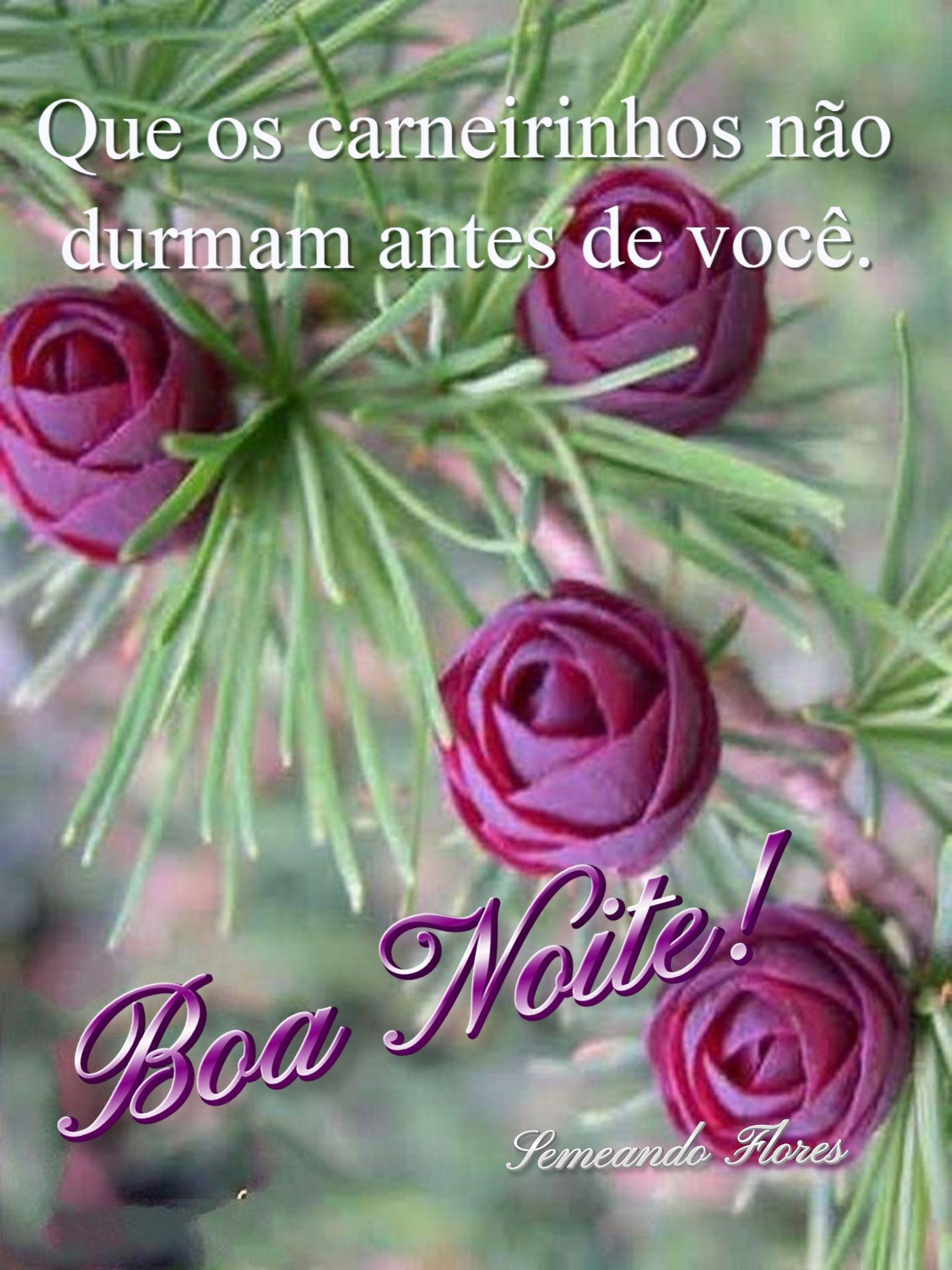 Pin De Cidinha Nobrega Em Semeando Flores Com Imagens Mensagem