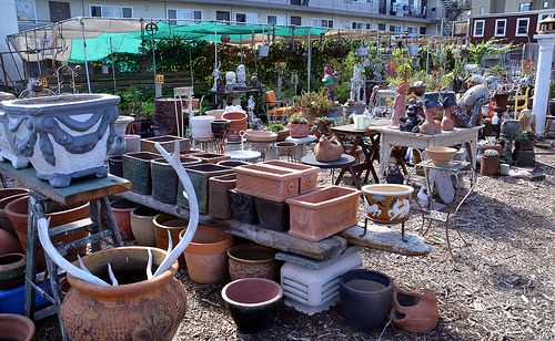 East Bay Wilds Native Plant Nursery 510 409 5858