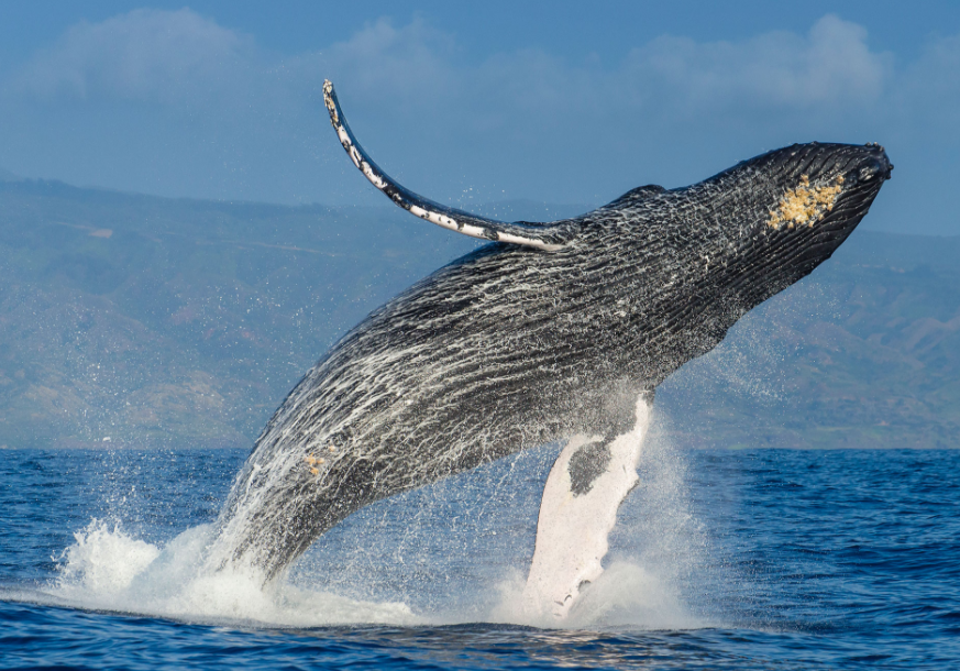 15 whales found dead (3% of entire population) this summer: reports
