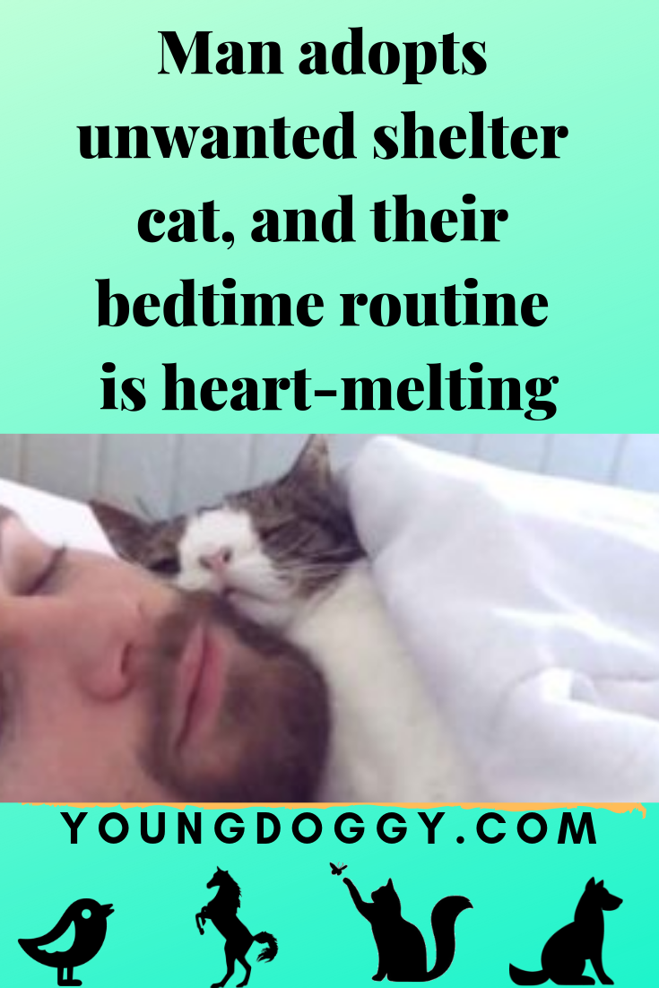 Man Adopts Unwanted Shelter Cat And Their Bedtime Routine Is