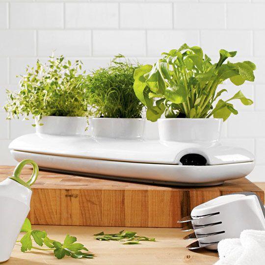 Windowsill herb garden planter. I'm thinking basil, parsley, and cilantro.