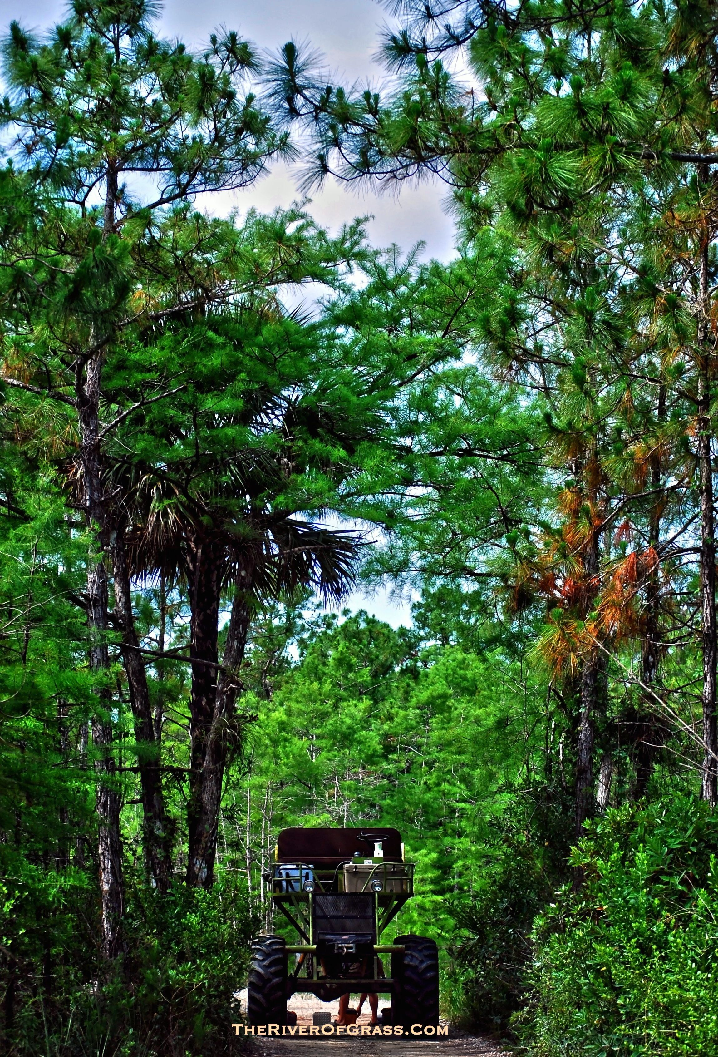 Swamp Buggy Tours in the Everglades Big Cypress National