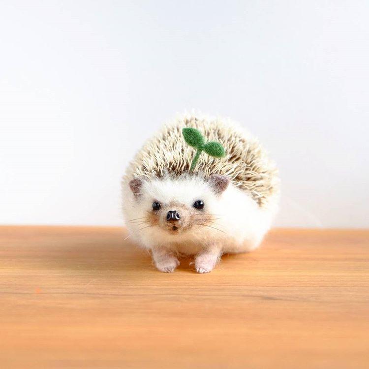 Yucoco Cafe Yuko Sakuda さんはinstagramを利用しています 発芽ぼんちゃん 先ほどのモデルさんはぼんあむ帽子でお馴染み ぼんちゃんでした Bon Amu お帽子屋さんのお手伝いが出来れば嬉しいです かわいいハリネズミ かわいいハムスター 可愛