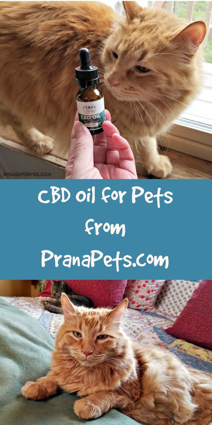 CBD Oil for Cats Did it Work for Sherpa the Farm Cat