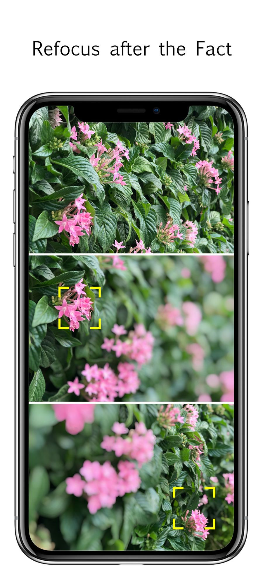 Focos Video Amp Apps Ios Herbs