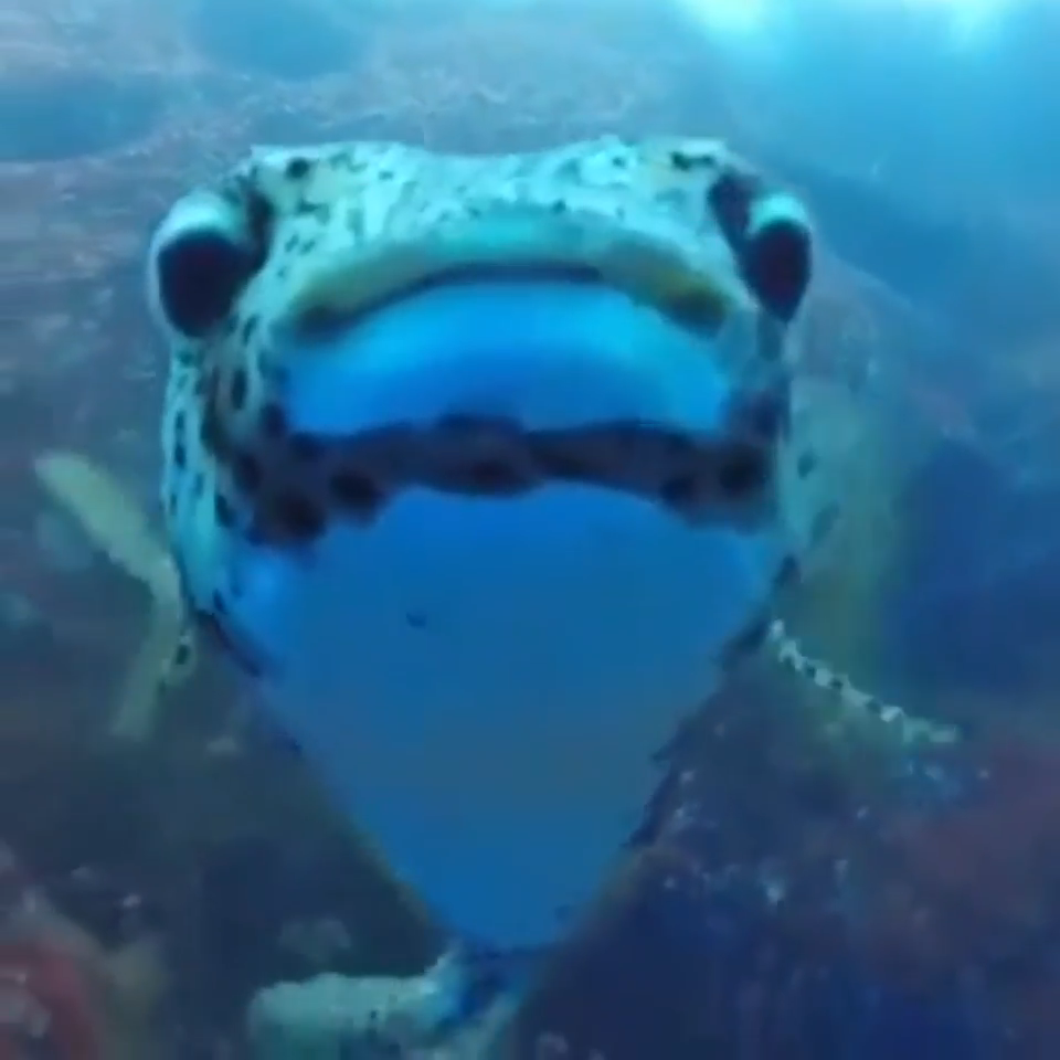 Photo of An unexpected new friend while filming sleepy sharks