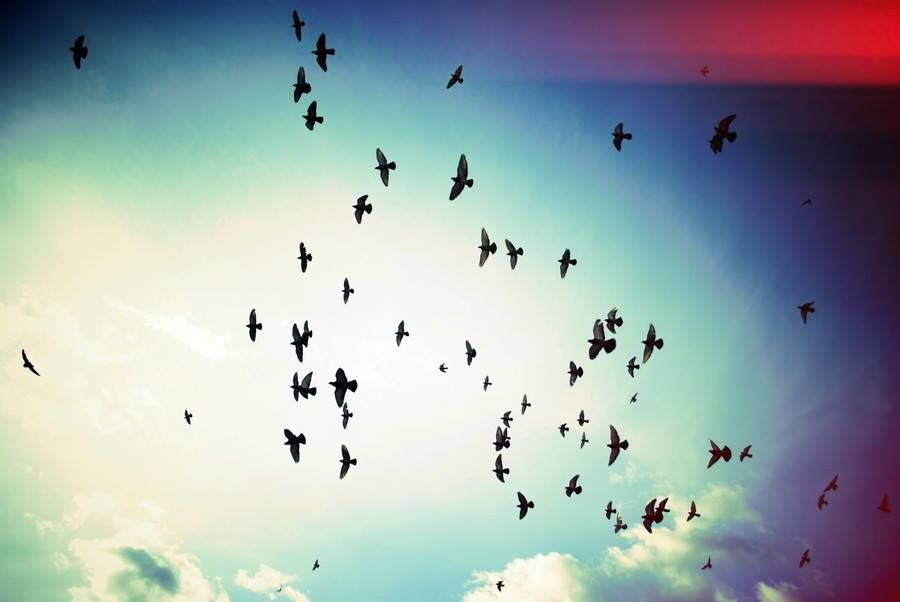 طيور محلقه في السماء Things To Come Bird Betrayal