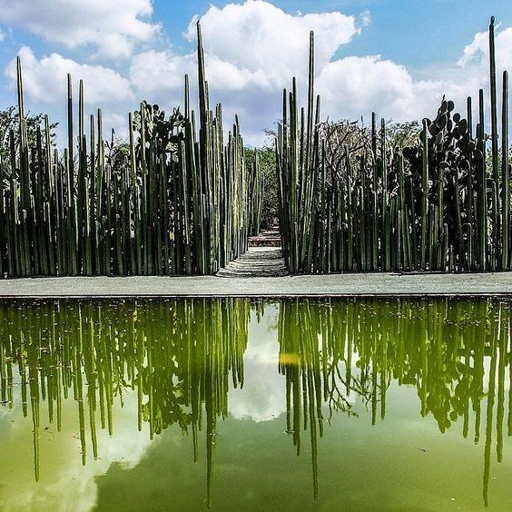 jardín etnobotánico de oaxaca   Garden design, Botanical ...