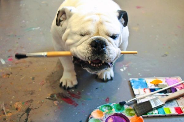 Piper The One Eyed Bulldog Paints Abstract Art For Charity With Images Bulldog Dog Artwork Abstract Art Painting