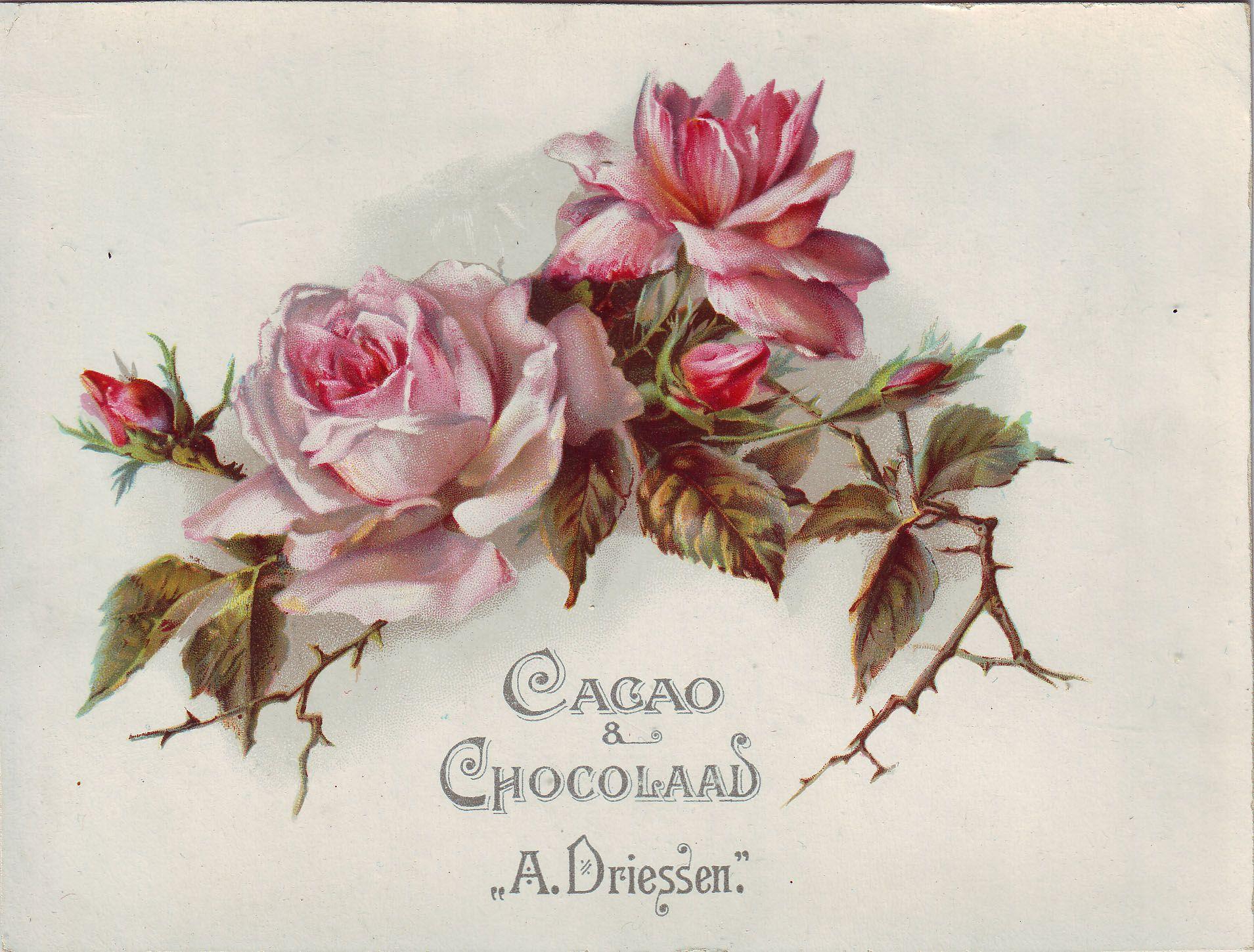 Днем мимозы, винтажная роза открытка