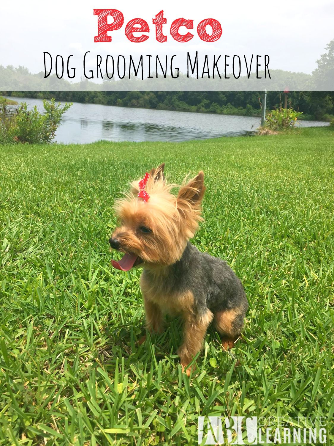 Petco Dog Grooming Makeover Petco Dog Dog Grooming Dogs