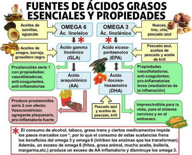 esquema fuentes alimentarias de acidos grasos esenciales omega