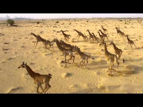 Epic Dubai Video — The Best Video of Dubai You Have Ever Seen