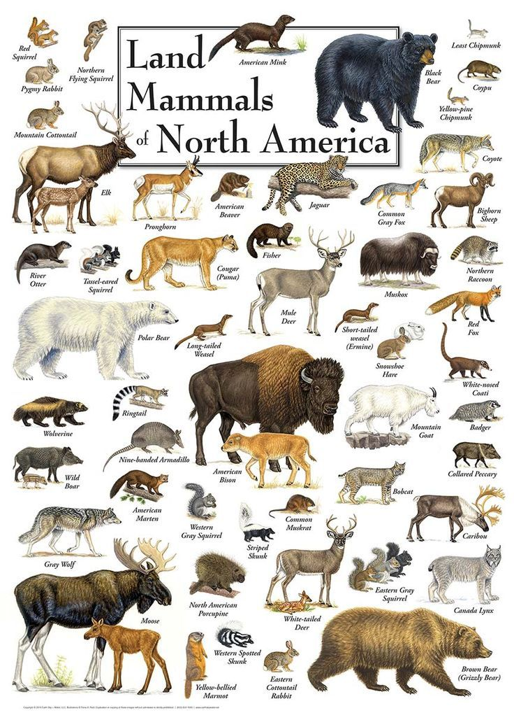 Land Mammals of North America, 1000 Pieces, MasterPieces