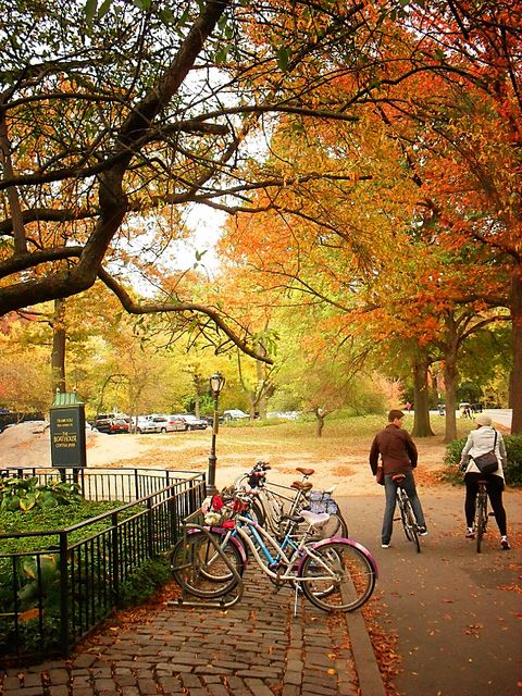 Central Park Autumn, New York City. The colour of the leaves look very beautiful.