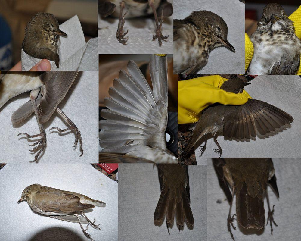 Bird Anatomy References by Shockshockshad on DeviantArt | animal ...