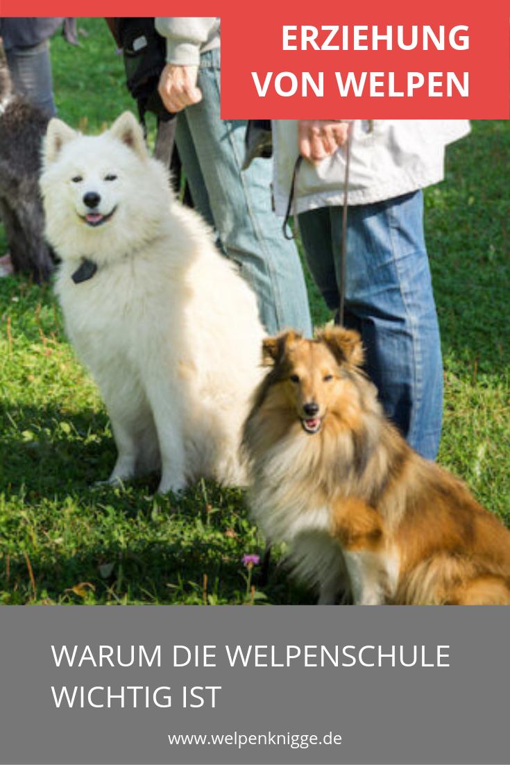 Welpenschule Mit Bildern Welpen Hundeschule Hundchen Training