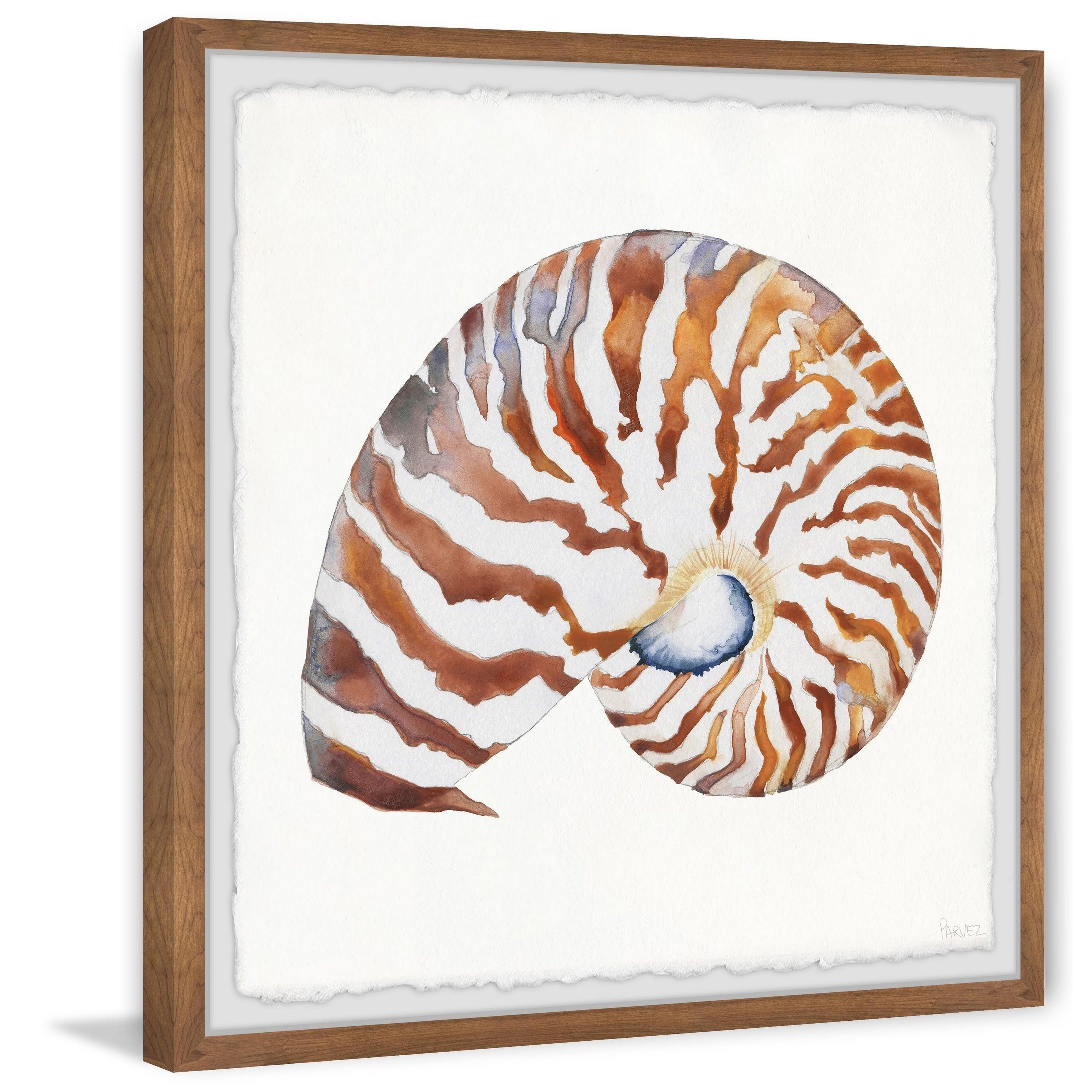 Handmade tiger shell framed print framed wall art