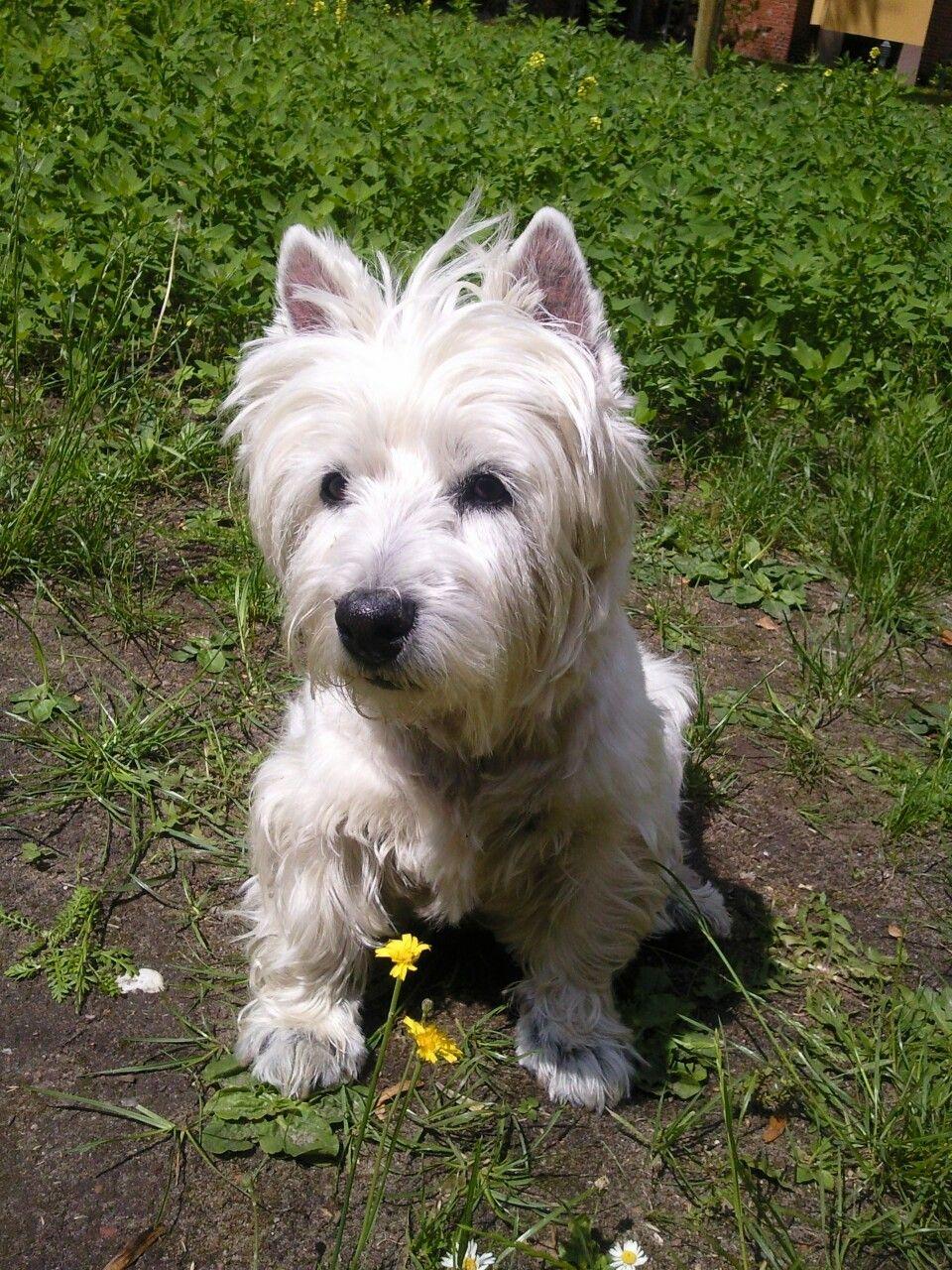Meine kleine Bonny. Sie wurde fast 15 Jahre. Wir vermissen sie sehr.😚