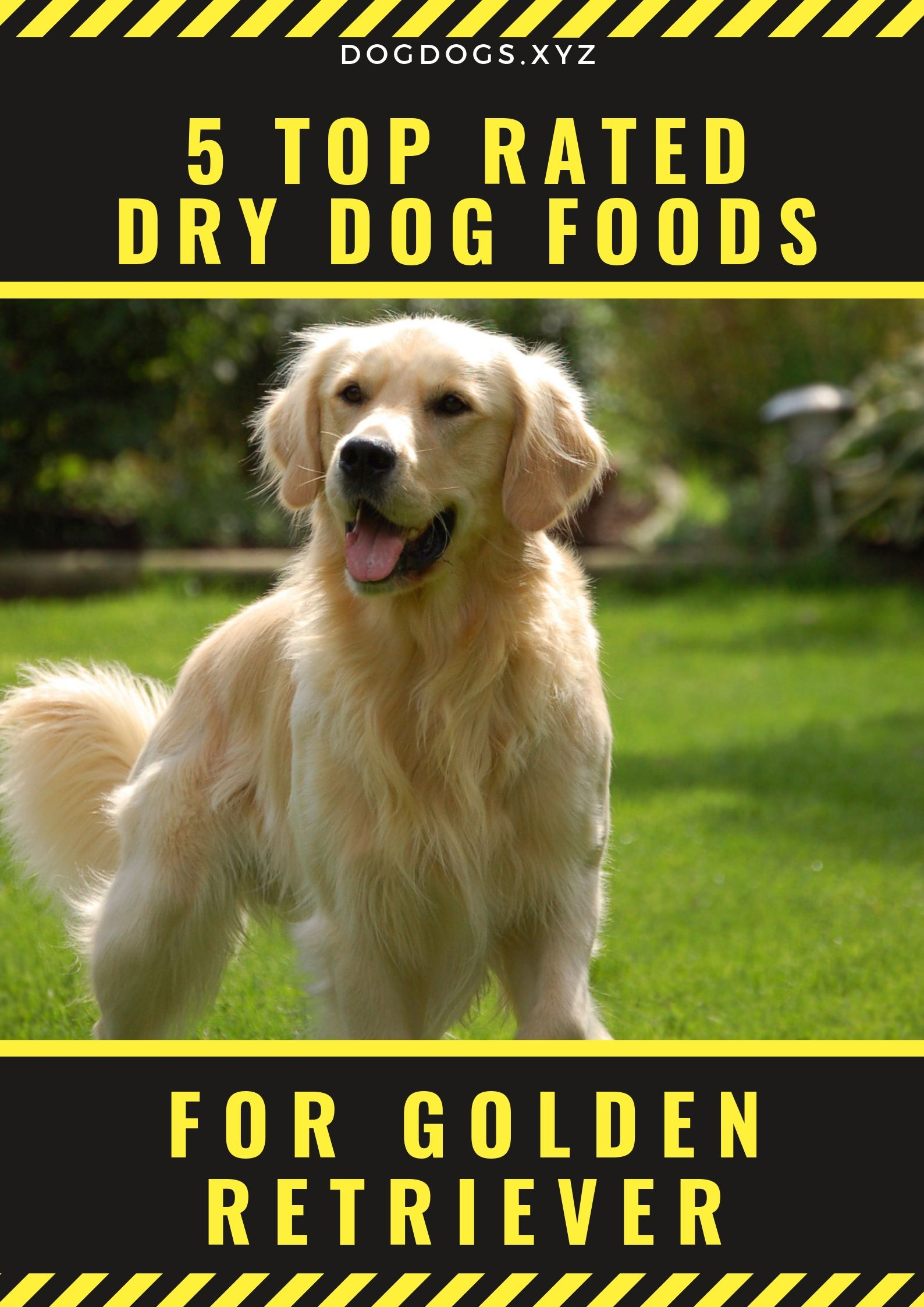 Kibble Or Dry Dog Food Makes It Easier For Golden Retriever Owner