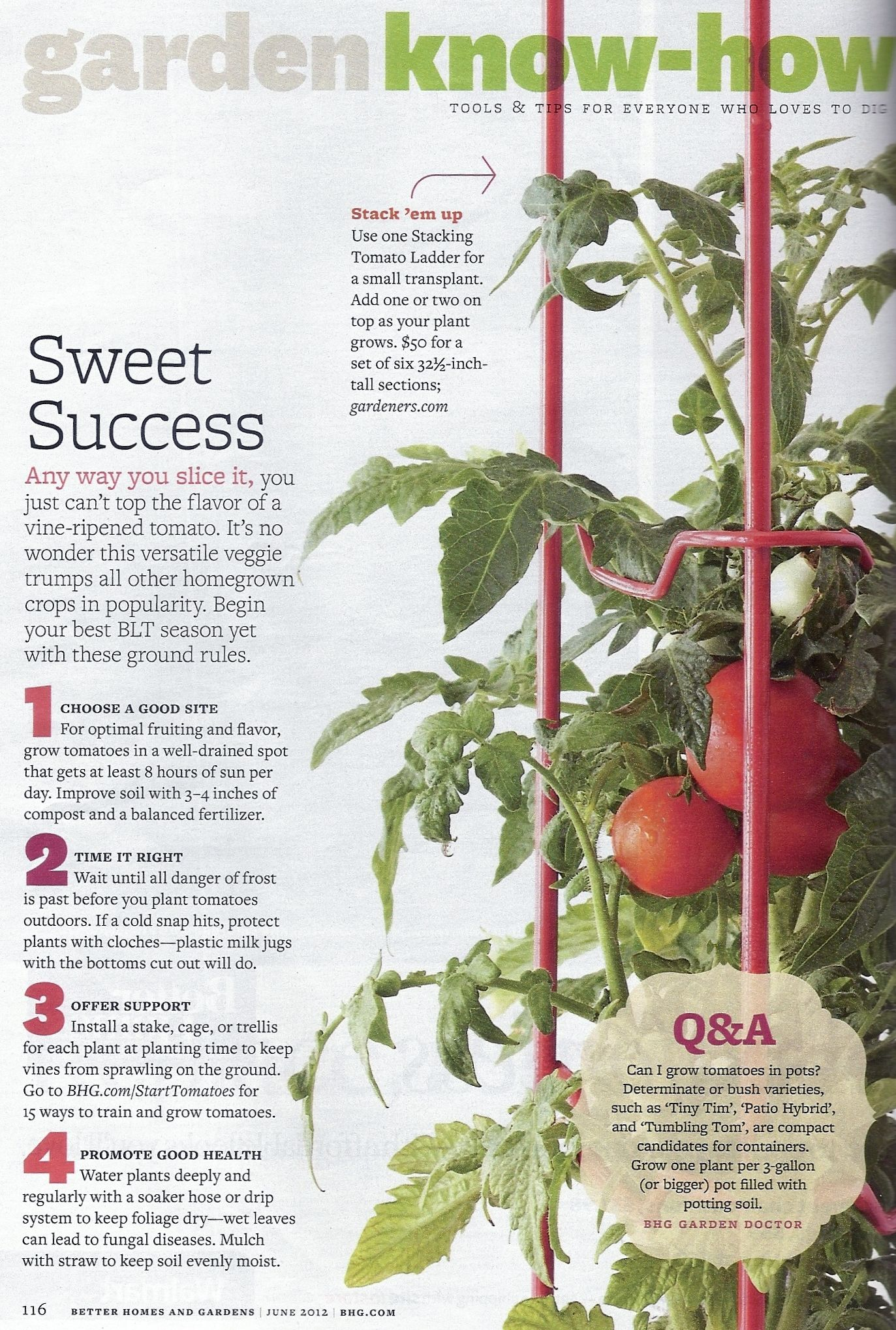 Pin By Tomato Dirt On Tomato Infographics Growing Tomato Plants Tips For Growing Tomatoes Growing Tomatoes