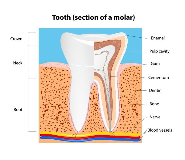 Nagel on curing tooth decay, notes in 3 parts.   Life Less Toxic ...