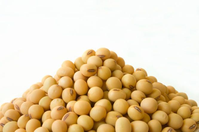 #Dangerous #Food #infi #Men #protein shake to lose weight for men #silently #Soy #soybean #unassuming IS SOY THE MOST DANGEROUS FOOD FOR MEN? The unassuming soybean has silently infiltrated the American diet as what might just be the perfect protein source: It's cheap and vegetarian, and could even unclog our hearts. But there may be a hidden dark side to soy, one that has the power to undermine everything it means to be male. SiseLEAN Meal Management Protein Shake contains NO SOY! sizzle...