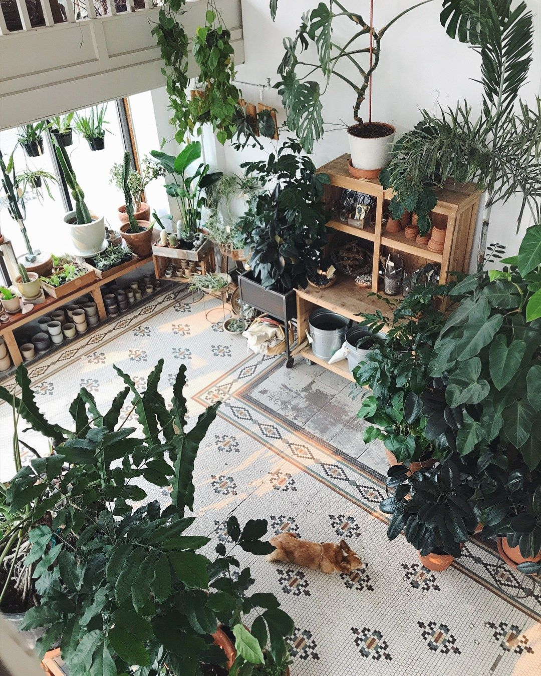 Home Decor Stores Portland Oregon: Portland Oregon Plant Shop Roundup