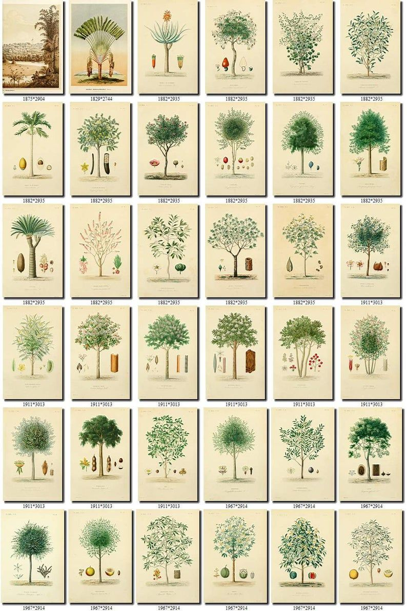 TREES-4 Collection of 270 vintage images vegetable