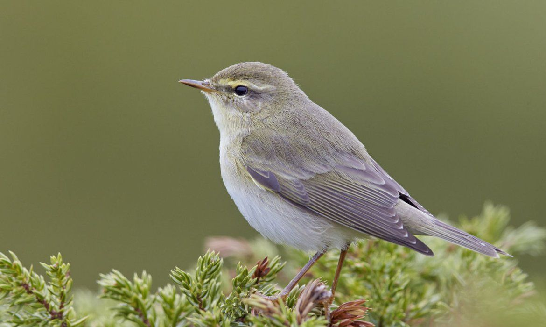 Pin Op Vogels