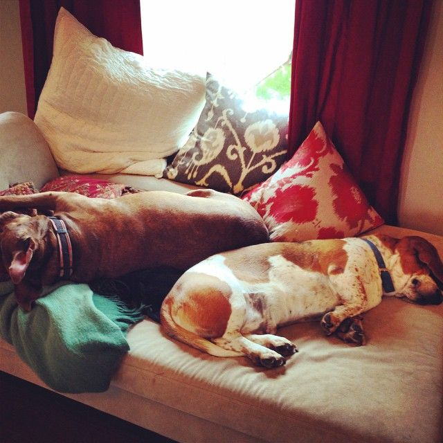 """These two ❤️ #lazypups"""