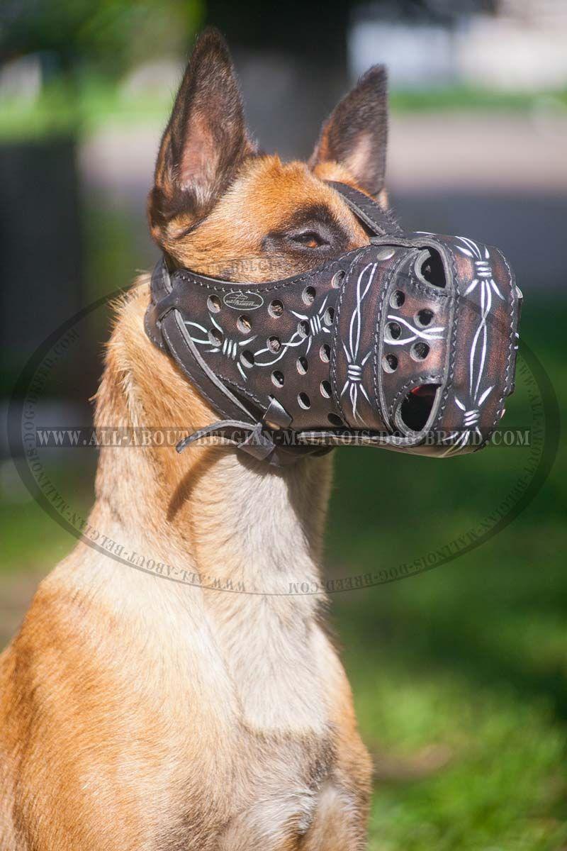 Leather Belgian Malinois Muzzle
