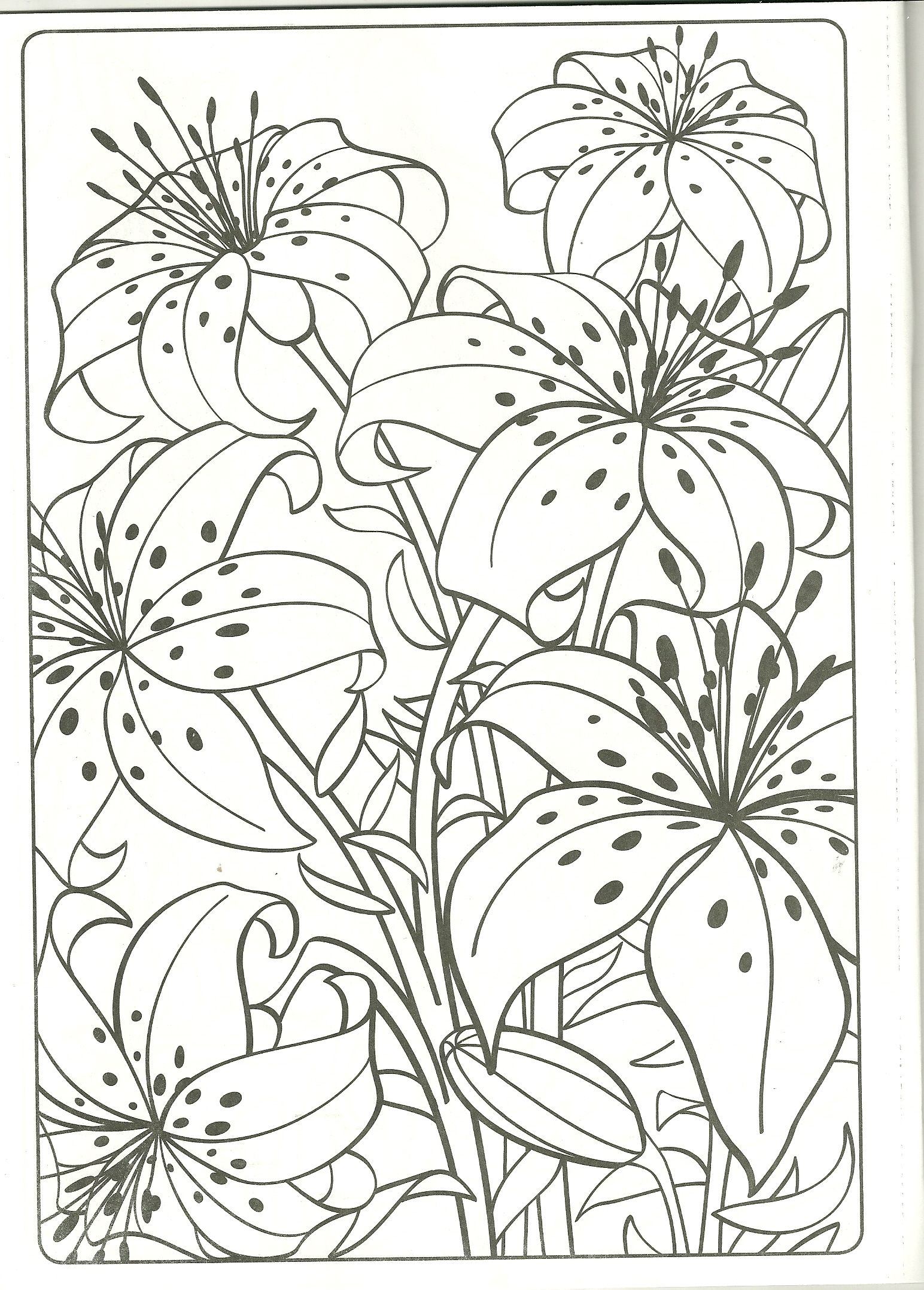 Tiger Lilly Coloring Page It S My Fave Flower Tiger Lily Coloring Pages Wood Burning Patterns