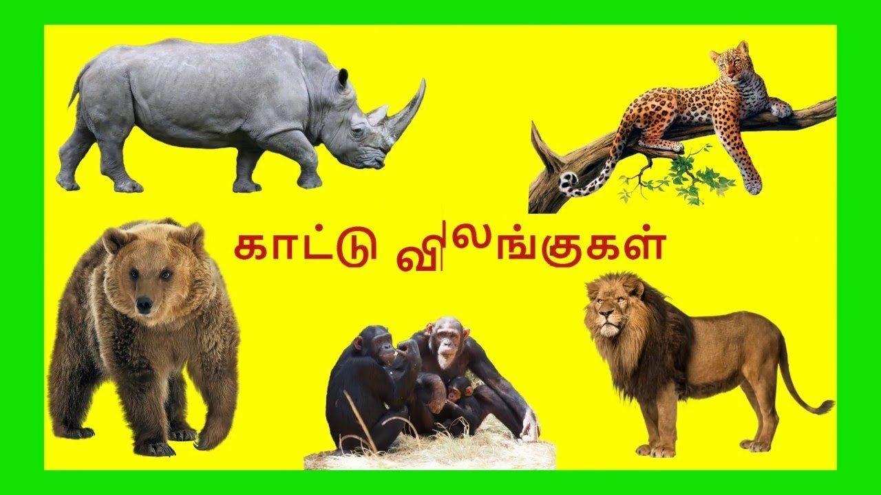 காட்டு விலங்குகள் /Tamil Wild animals name video for Kids