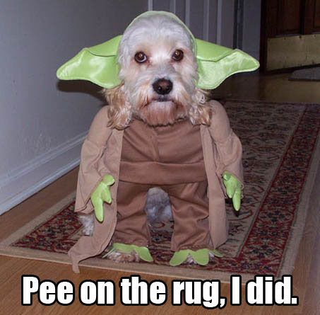 Greetings from Stanley Steemer of Charleston & Mrytle Beach! | Best dog  halloween costumes, Dog halloween costumes, Dog costumes funny