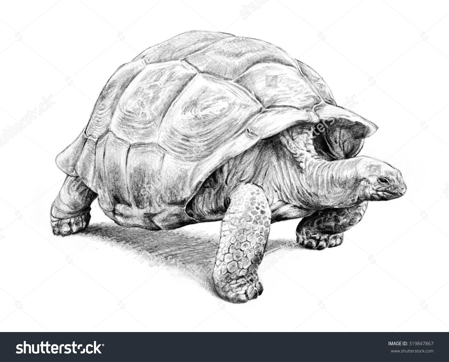 Pin by heather miller on art inspiration in 2019 tortoise drawing
